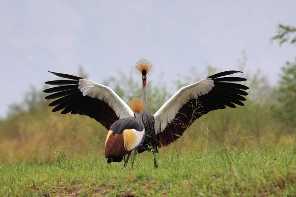wildlife tours uganda - uganda bird watching