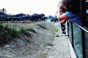 queen elizabeth national park for Uganda Safaris and Tours
