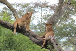 Queen Elizabeth National Park